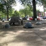 turtle park