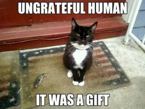 funny-cat-gift-mouse-ungrateful1