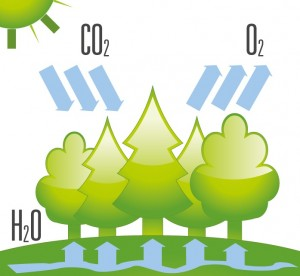 co2forest